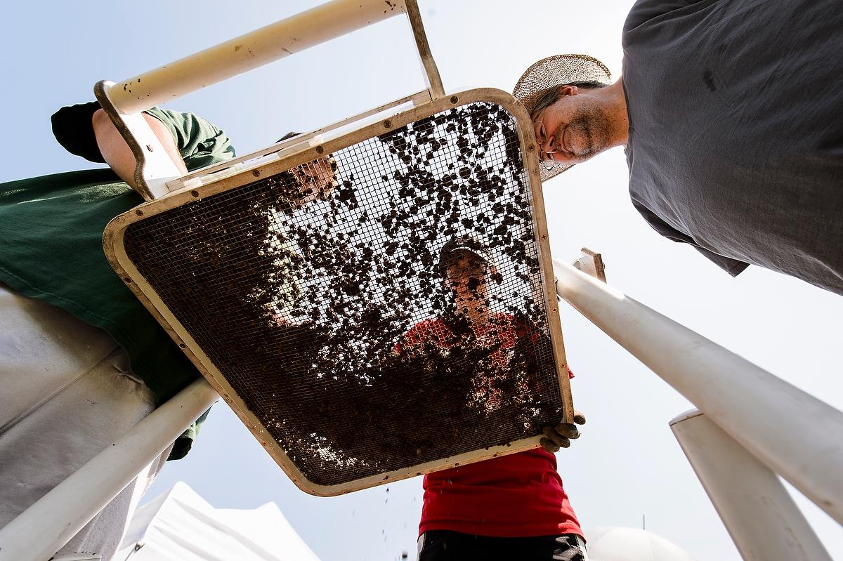 students screening soil at Aztalan field school